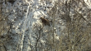 HDA13_385 - HD stock footage aerial video of a bear running through the woods in Rocky Mountains, Colorado
