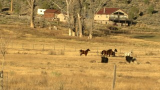 HDA13_395 - HD stock footage aerial video of horses in a field, and reveal cattle, Ridgway, Colorado