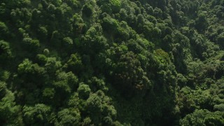 SS01_0106 - 5K stock footage video fly over dense forest on Hong Kong Island, China