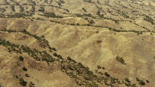 TS01_065 - 1080 stock footage aerial video of rolling hills in Paso Robles, California
