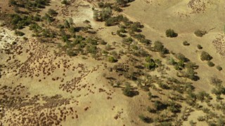 TS01_066 - 1080 stock footage aerial video of rolling hills in Paso Robles, California