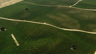 TS01_074 - 1080 stock footage aerial video of farm fields in Paso Robles, California