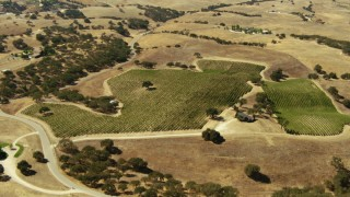 TS01_077 - 1080 stock footage aerial video of flying over a vineyard in Paso Robles, California
