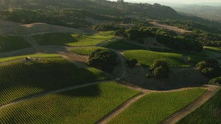TS01_193 - 1080 stock footage aerial video of flying over hillside vineyard in Bennett Valley, California