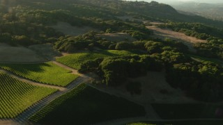 TS01_194 - 1080 stock footage aerial video of flying over vineyard and hills in Bennett Valley, California
