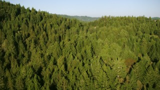 TS01_211 - 1080 stock footage aerial video of flying over mountains and evergreen forest in Sonoma County, California