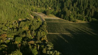 TS01_219 - 1080 stock footage aerial video approach and tilt to vineyards in Guerneville, California
