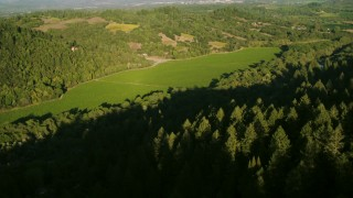 TS01_221 - 1080 stock footage aerial video of flying over evergreens to approach vineyard in Forestville, California