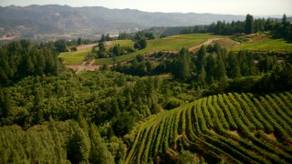 TS01_233 - 1080 stock footage aerial video of flying over hilly vineyards in Santa Rosa, California