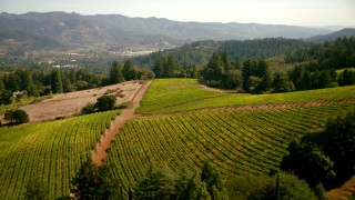 TS01_234 - 1080 stock footage aerial video of flying over a vineyard toward hills in Santa Rosa, California