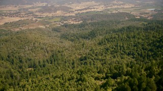 TS01_244 - 1080 stock footage aerial video of tilting from forest to approach vineyards in Pope Valley, California