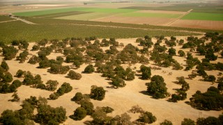 TS01_268 - 1080 stock footage aerial video of flying over farm fields, trees near canals in Capay, California