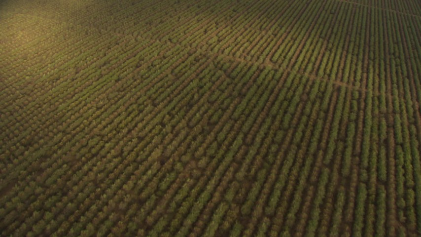 HD stock footage aerial video of a bird's eye view of crops and farmland in the Central Valley, California Aerial Stock Footage | AF0001_000029