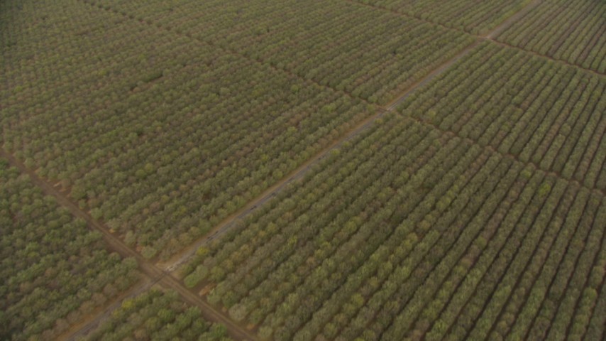 HD stock footage aerial video of a bird's eye view of crop fields in the Central Valley, California Aerial Stock Footage | AF0001_000030