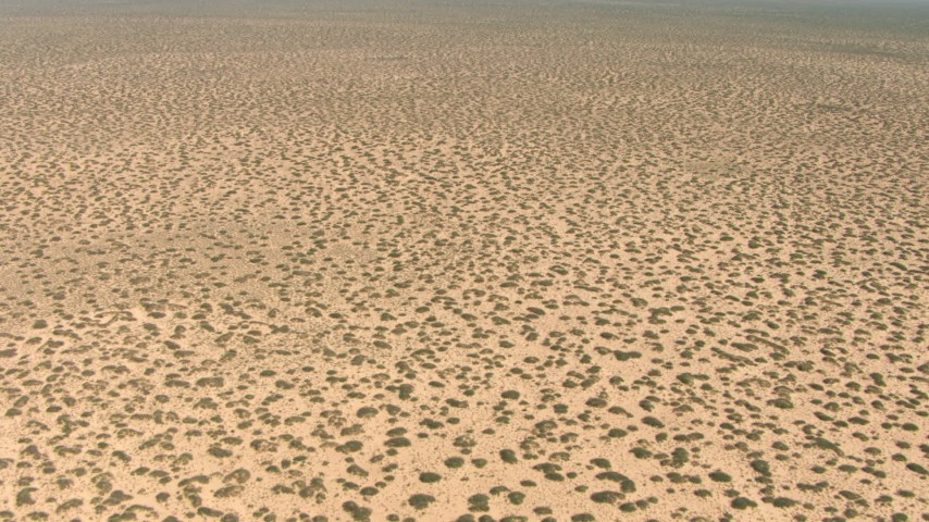 Fly over desert plants in a flat plain in New Mexico Aerial Stock Footage | AF0001_000896