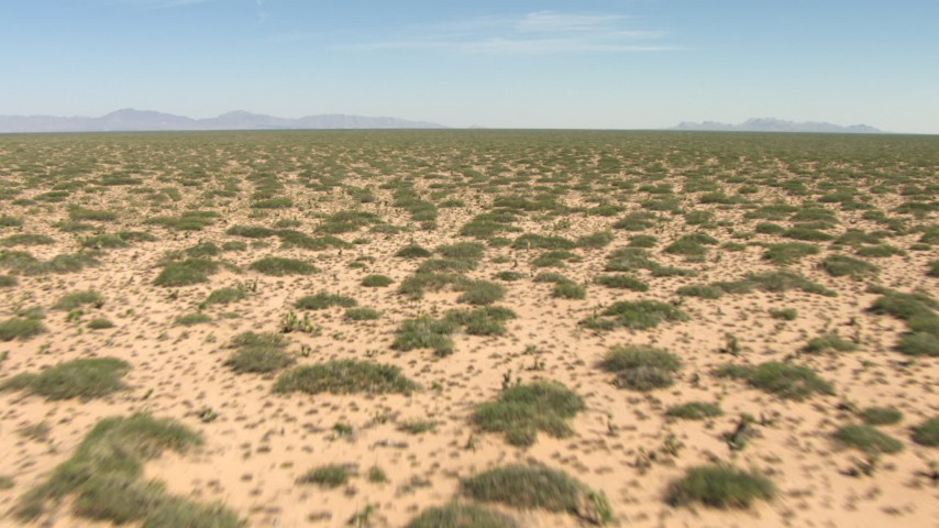 Fly low over plants in a desert plain in New Mexico Aerial Stock Footage | AF0001_000899