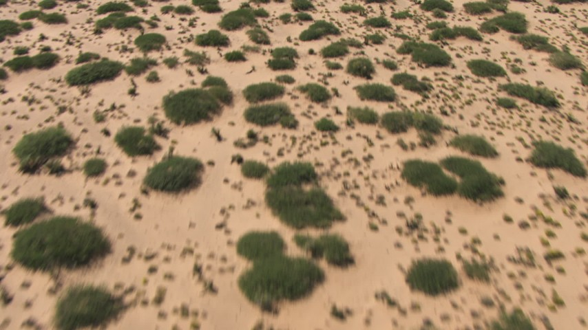 A reverse view of desert vegetation, New Mexico Aerial Stock Footage | AF0001_000915