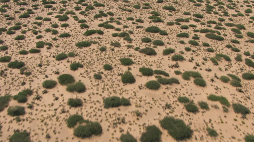 Reverse view of vegetation on a flat desert plain in New Mexico Aerial Stock Footage | AF0001_000916