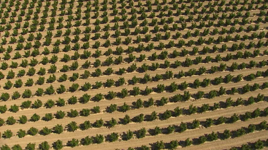 1080 stock footage aerial video a bird's eye view of rows of crops, Central Valley, California Aerial Stock Footage | AI06_FRM_002
