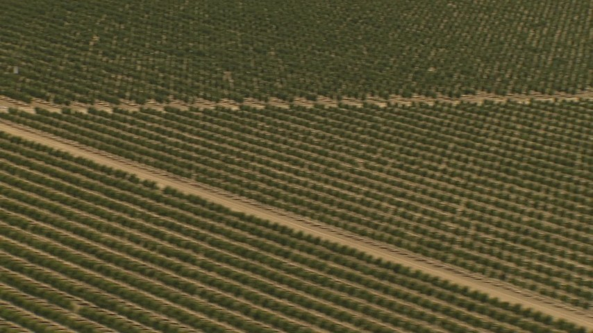 1080 stock footage aerial video flying by fields of crops, Central Valley, California Aerial Stock Footage | AI06_FRM_004