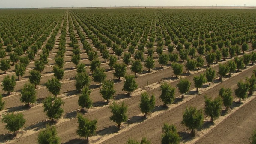 1080 stock footage aerial video flying low over rows of crops, Central Valley, California Aerial Stock Footage | AI06_FRM_007