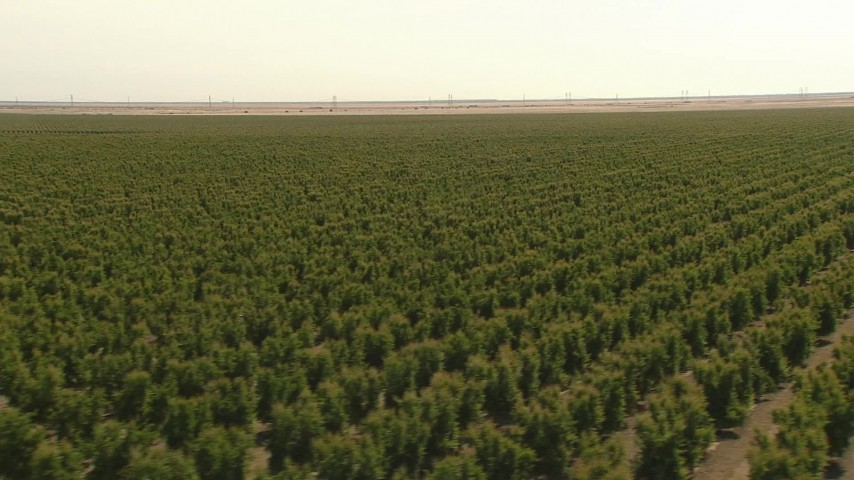 1080 stock footage aerial video flying low over crops, revealing and orbiting a tractor, Central Valley, California Aerial Stock Footage | AI06_FRM_014