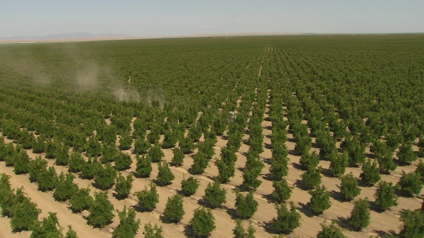 orbiting a tractor passing rows of crops central valley