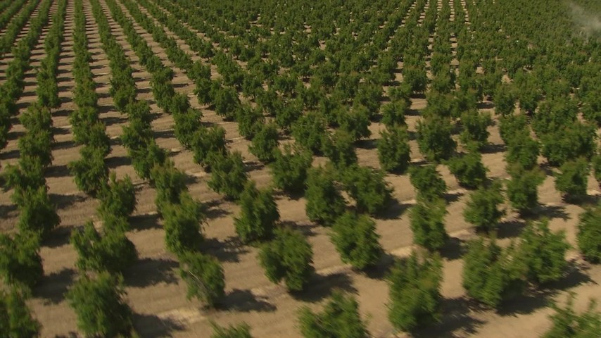 1080 stock footage aerial video flying over crops, pan and reveal the tractor, Central Valley, California Aerial Stock Footage | AI06_FRM_016