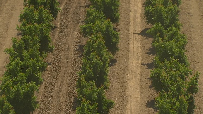 1080 stock footage aerial video flying over crops, revealing tractor, Central Valley, California Aerial Stock Footage | AI06_FRM_017