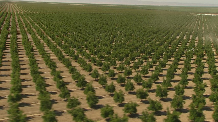 1080 stock footage aerial video flying by rows of crops, Central Valley, California Aerial Stock Footage | AI06_FRM_019