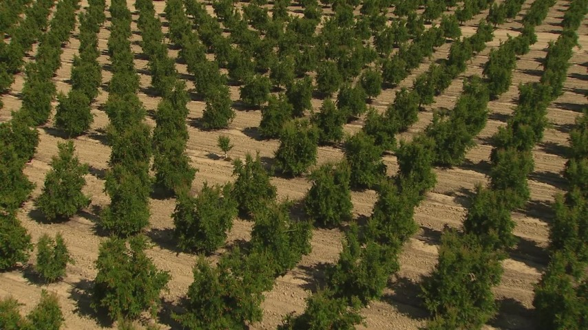 1080 stock footage aerial video flying over rows of crops and tilt to the trees, Central Valley, California Aerial Stock Footage | AI06_FRM_021
