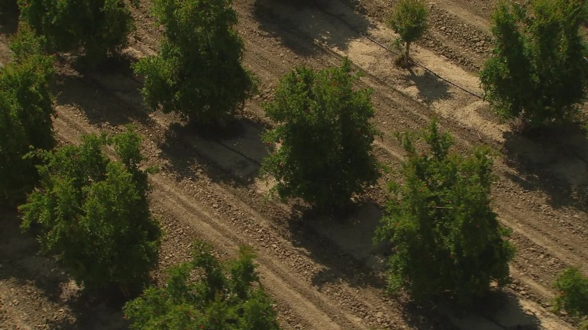 1080 stock footage aerial video orbit trees in an orchard, Central Valley, California Aerial Stock Footage | AI06_FRM_022