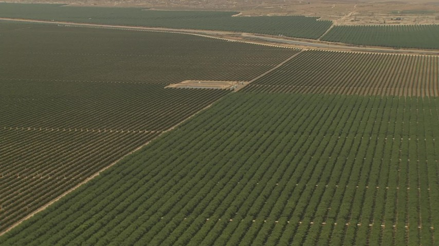 1080 stock footage aerial video flying over farmland, tilt down to crops, Central Valley, California Aerial Stock Footage   AI06_FRM_024