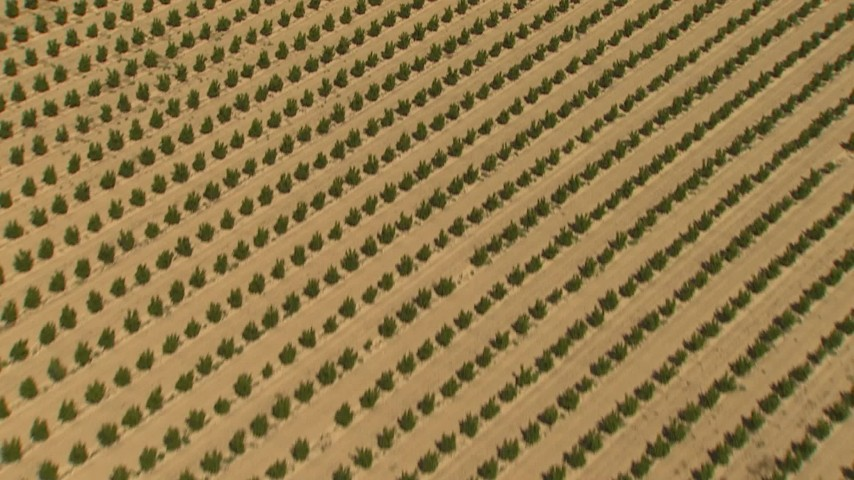 1080 stock footage aerial video reverse view of orchard, Central Valley, California Aerial Stock Footage | AI06_FRM_025