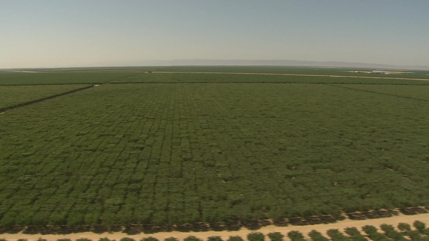 1080 stock footage aerial video flying low by fields of crops, Central Valley, California Aerial Stock Footage | AI06_FRM_043