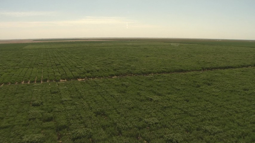 1080 stock footage aerial video fly over orchard, Central Valley, California Aerial Stock Footage | AI06_FRM_045