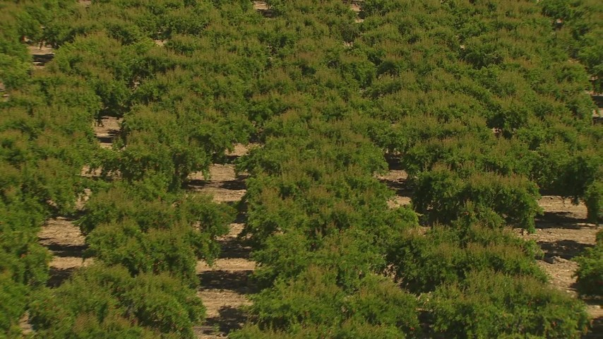 1080 stock footage aerial video fly over orchard and tilt to the trees, Central Valley, California Aerial Stock Footage | AI06_FRM_050