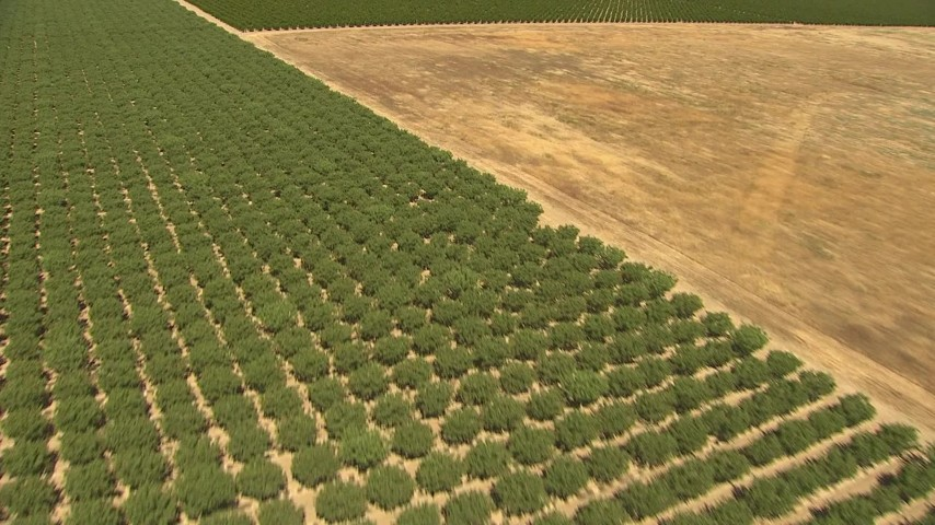 1080 stock footage aerial video lying over open fields and orchards, Central Valley, California Aerial Stock Footage | AI06_FRM_054