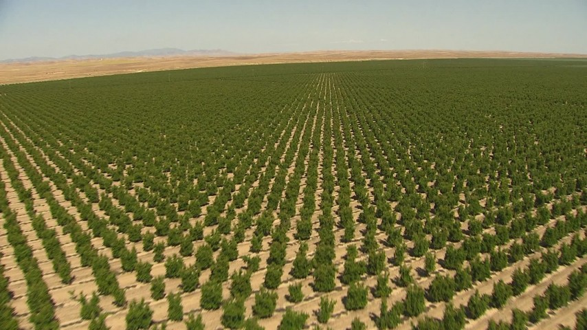 1080 aerial video flying low over rows of crops central