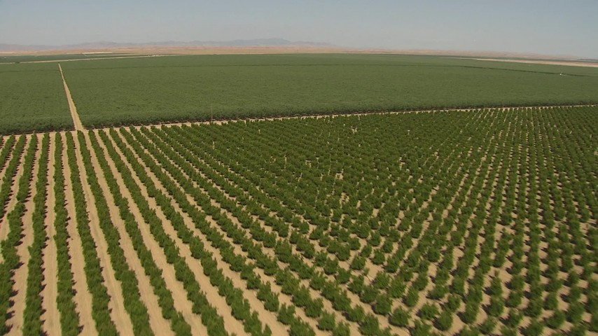 1080 stock footage aerial video flying over trees in an orchard in Central Valley, California Aerial Stock Footage   AI06_FRM_072