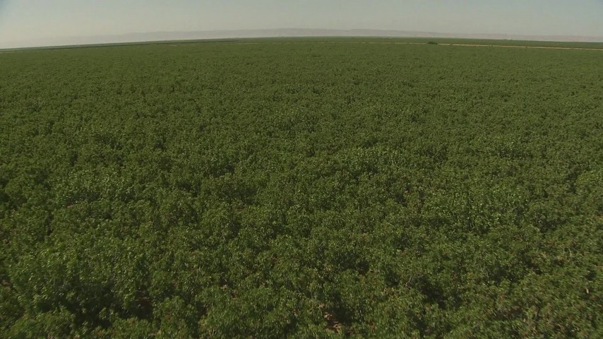 1080 stock footage aerial video descend toward an orchard, Central Valley, California Aerial Stock Footage | AI06_FRM_075