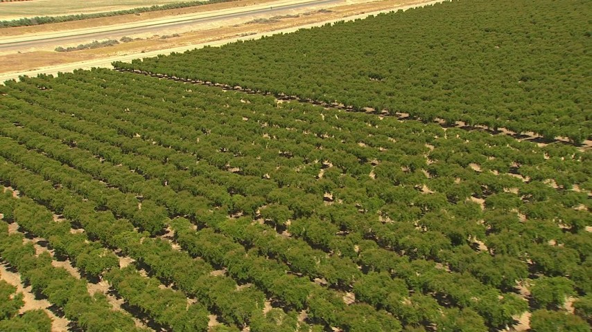 1080 stock footage aerial video zoom to wide view of orchard and aqueduct, Central Valley, California Aerial Stock Footage | AI06_FRM_087