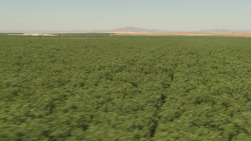 1080 stock footage aerial video flying low over an orchard, Central Valley, California Aerial Stock Footage | AI06_FRM_089