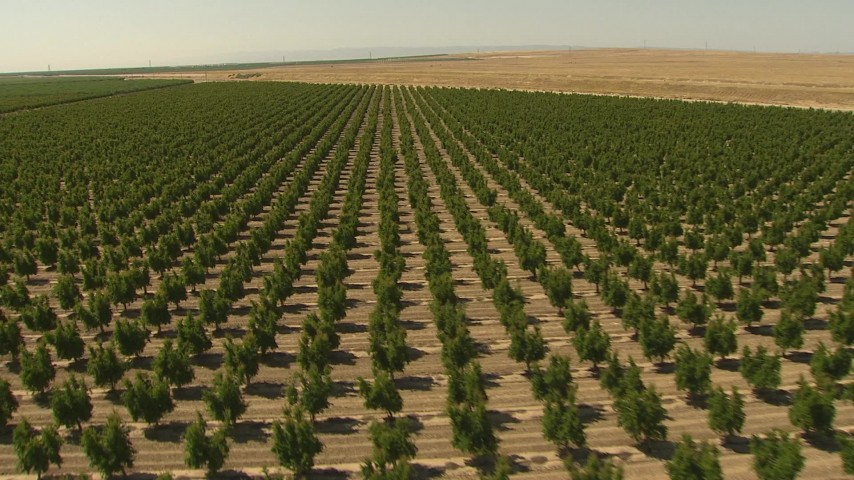 1080 stock footage aerial video flying over an orchard, Central Valley, California Aerial Stock Footage   AI06_FRM_092