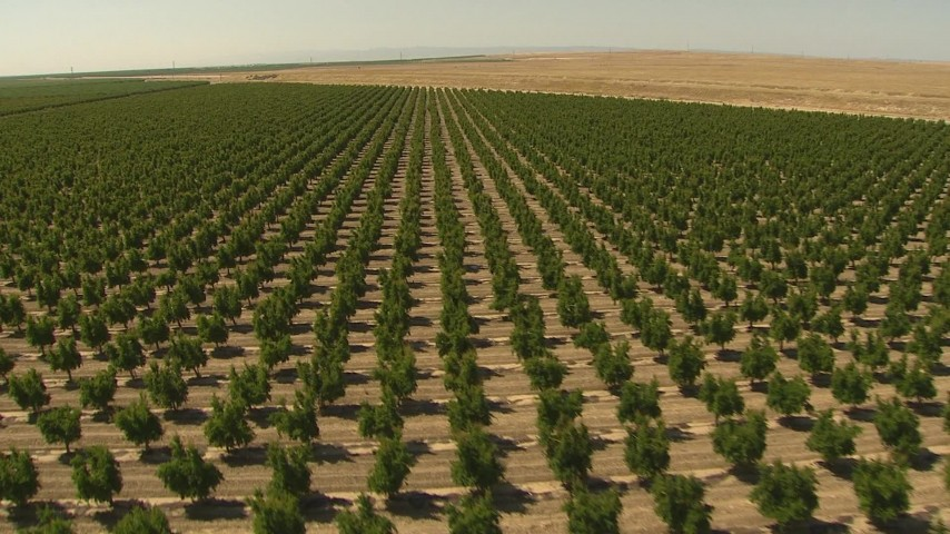 1080 stock footage aerial video flying over an orchard, Central Valley, California Aerial Stock Footage | AI06_FRM_093