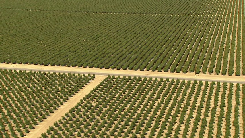 1080 stock footage aerial video tilt to a view of an orchard and a dirt road, Central Valley, California Aerial Stock Footage | AI06_FRM_096