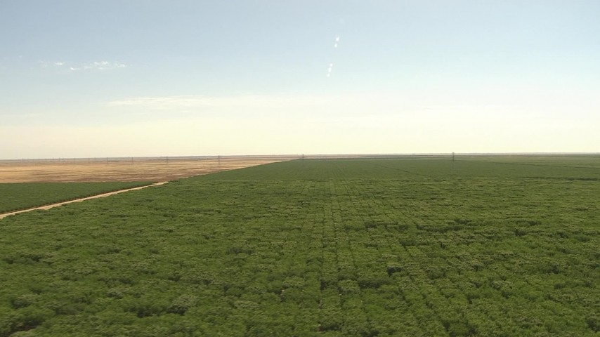 1080 stock footage aerial video of a vast orchard, Central Valley, California Aerial Stock Footage | AI06_FRM_097
