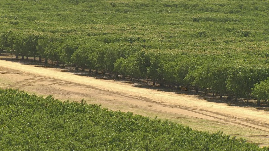 1080 stock footage aerial video of lush trees in an orchard, Central Valley, California Aerial Stock Footage | AI06_FRM_098