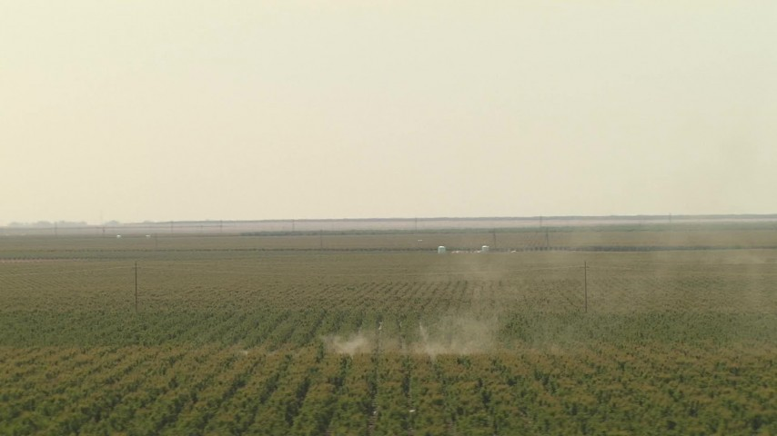 1080 stock footage aerial video of dust rising from the orchard trees, Central Valley, California Aerial Stock Footage | AI06_FRM_108