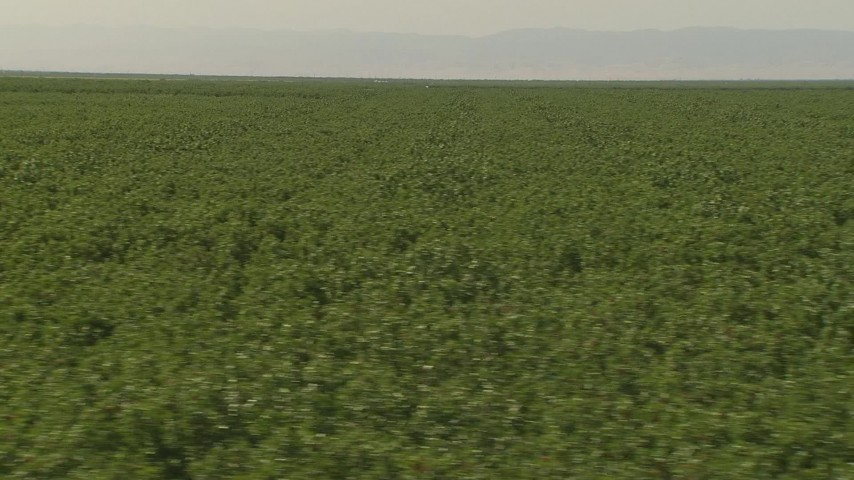 1080 stock footage aerial video flyby rows of orchard trees and dirt road, Central Valley, California Aerial Stock Footage | AI06_FRM_118